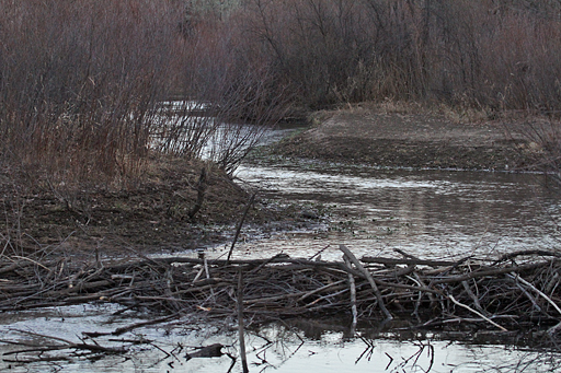 Beaver Dam near Mouth of Plum Creek
